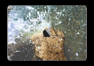 "De vilde farvande Skin MacBook Pro 13"" 2016-"