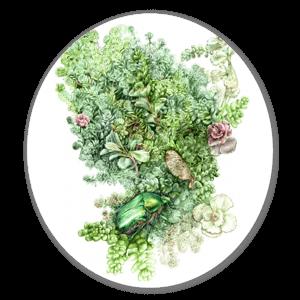 Blumen und Käfer sticker