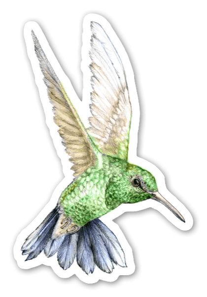 Green hummingbird sticker