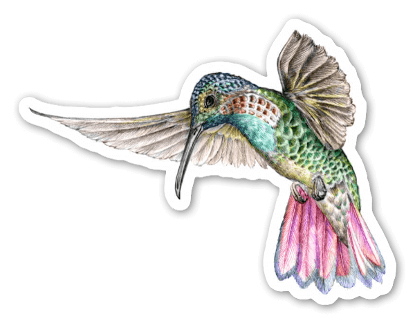 Roter Kolibri sticker