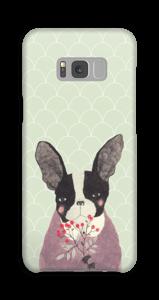 Fransk bulldog skal Galaxy S8 Plus