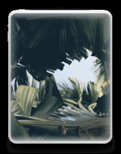 Tropical Leaves Skin IPad 1