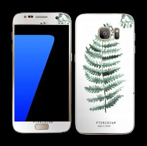 Pteridium Aquilinum   tarrakuori Galaxy S7