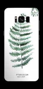 Pteridium Aquilinum   tarrakuori Galaxy S8