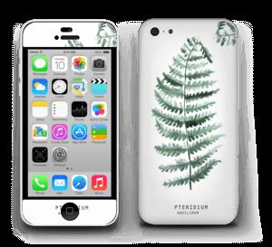Pteridium Aquilinum   tarrakuori IPhone 5c