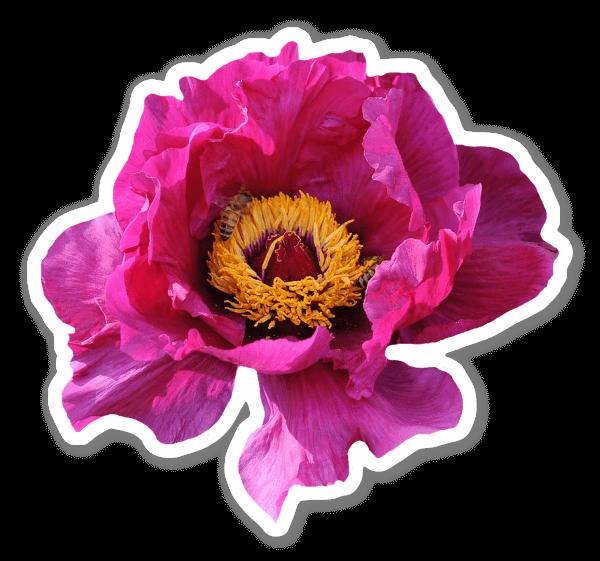 Fleur Rose sticker