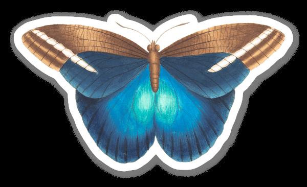 Blauer Schmetterling sticker