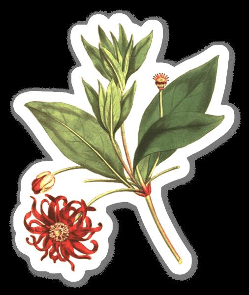 Plante botanique sticker