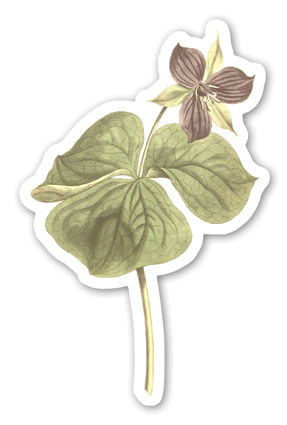 Botanique vintage sticker