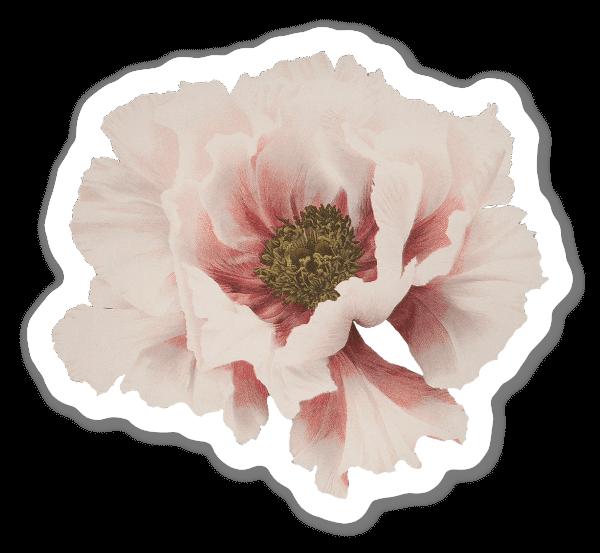 Vacker Blomma sticker