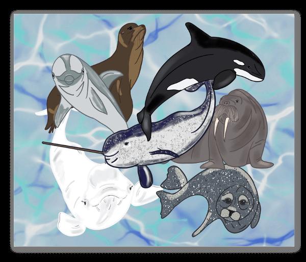 Marine Mammal Grouping sticker