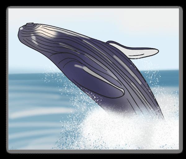 Balena blu sticker