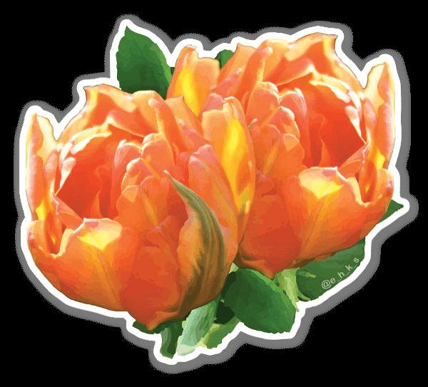 Tulipa sticker