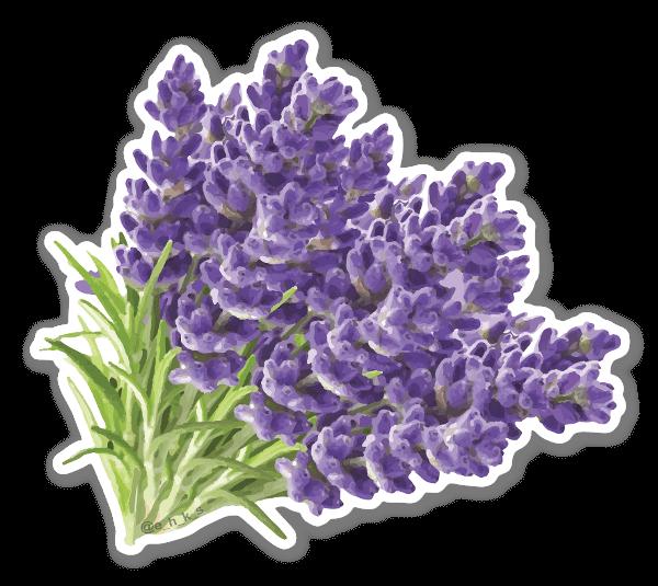 Lavanda floreale sticker