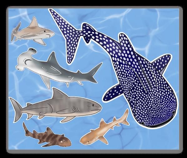 Adoro Tubarões! sticker