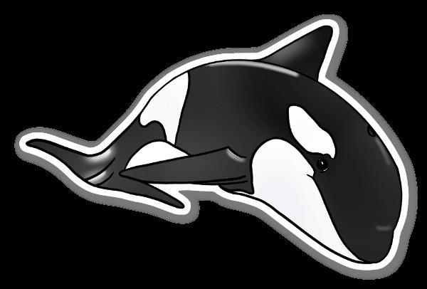 Nadando com Orcas sticker