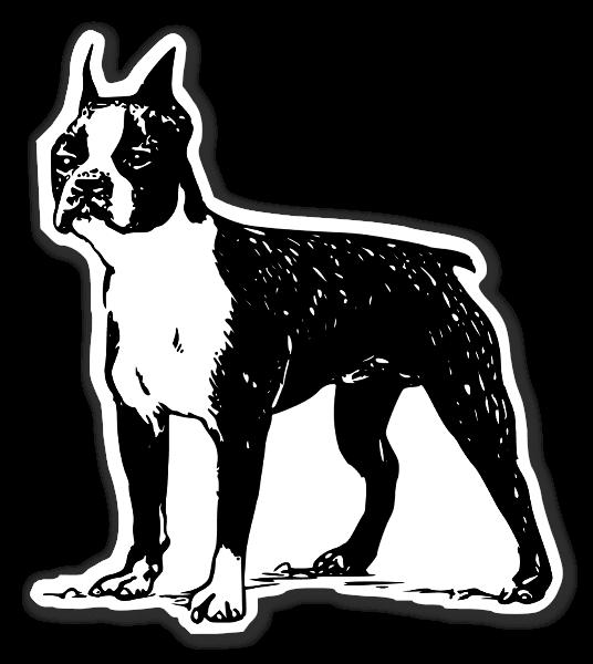 Boston terrier Klistremerker